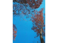 1leaves-in-transity-under-blue-sky